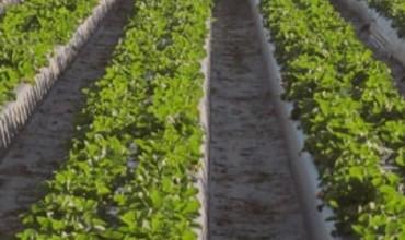 Farmland Portfolio