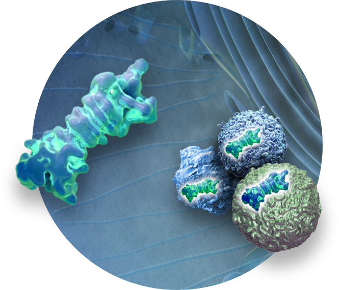 A First-in-Class Selective Immunoproteasome Inhibitor
