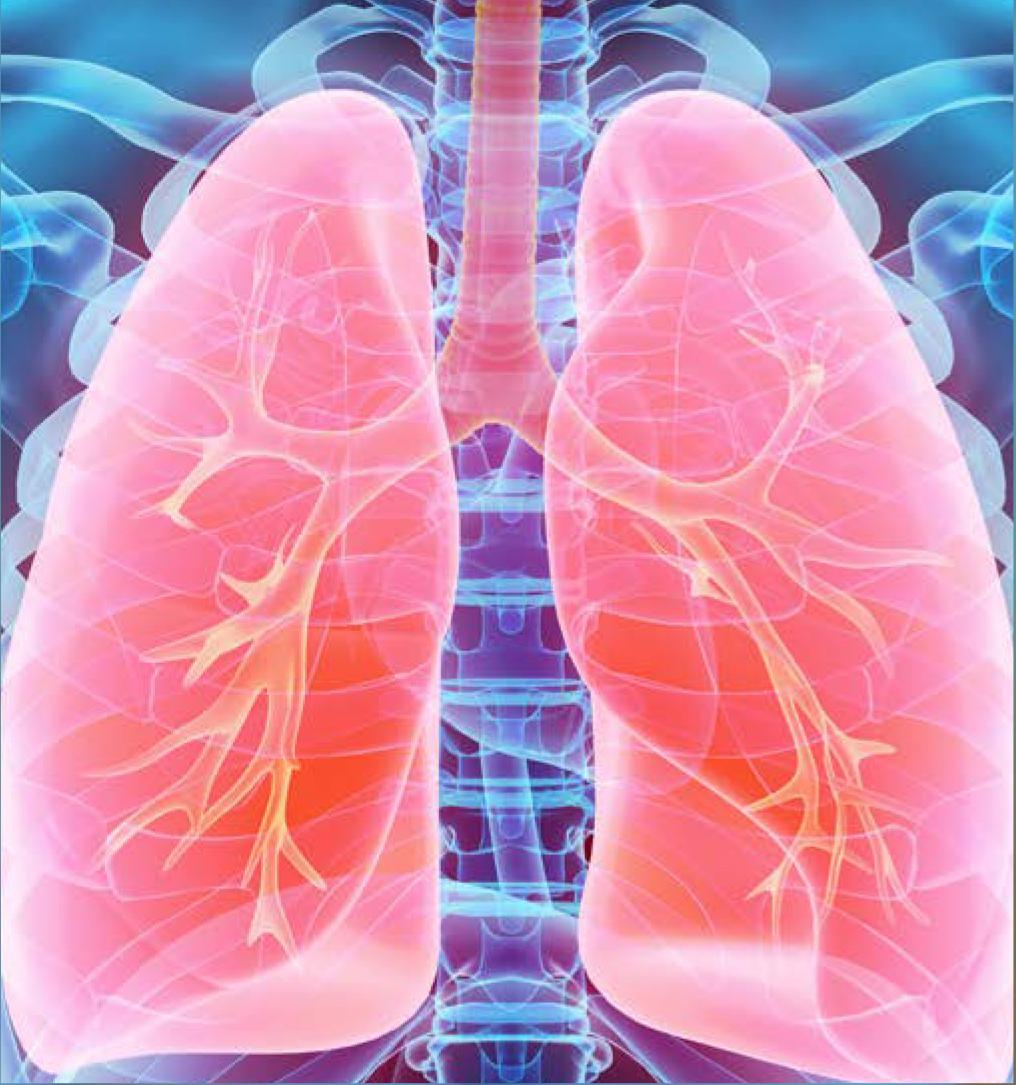 Pieris in Respiratory Diseases