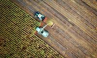 Marijuana Company of America Provides Update on Oregon Hemp Farm's Biomass Sale