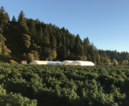 Update on Marijuana Company of America's Oregon Hemp Project