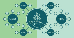Different Types of Cannabinoids Explained