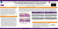 Efficacy of Ibrexafungerp (IBX, formerly SCY-078) in the Treatment of <em>Candida auris</em> Cutaneous Infection in a Guinea Pig Model