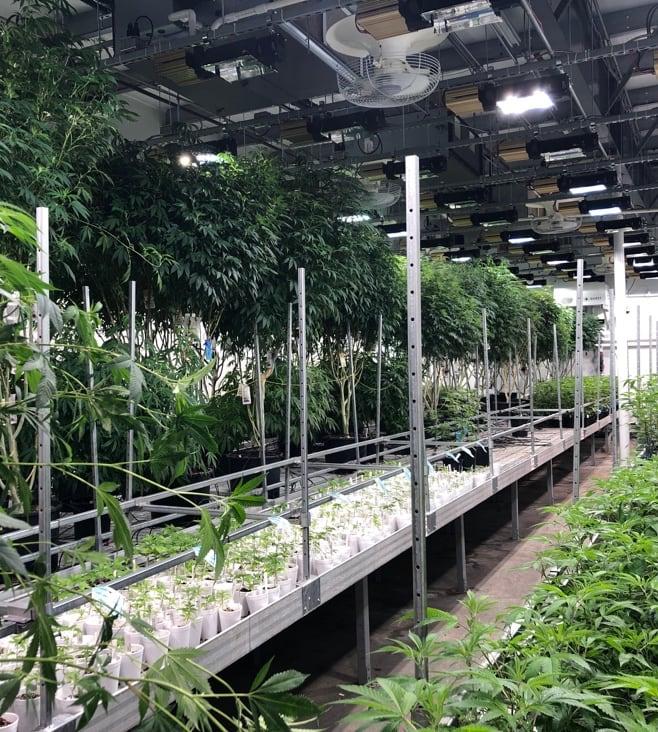 High Quality,  Craft Cannabis
