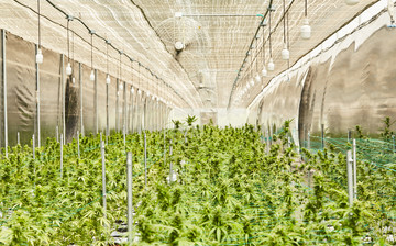 Cultivation Site photo 9 of {{total_images}} thumbnail