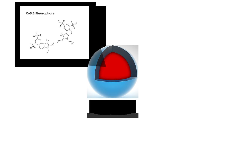 c-dot and fluorophore diagram