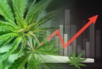 Marijuana Company of America Announces 504% Year-Over-Year Revenue Increase for First Quarter 2019 Financial Results