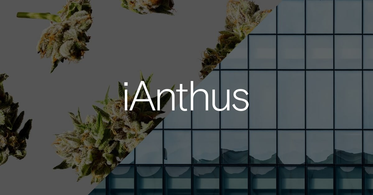 Image result for ianthus