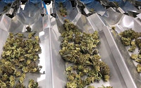Marijuana Company of America Provides Update on Viva Buds, Its Cannabis Delivery Service