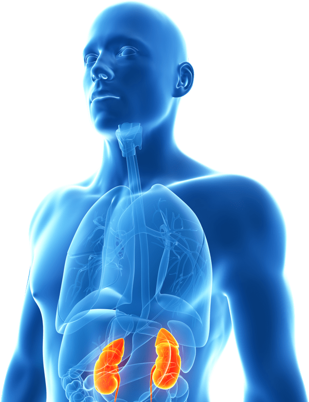About Chronic Kidney Disease