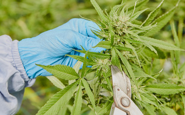 Cultivation Site photo 5 of {{total_images}} thumbnail