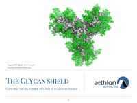 The Virus Glycan Shield
