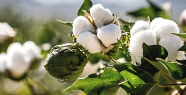 What Does 'Sustainable' Cotton Mean to Kontoor Brands