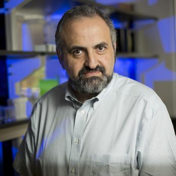 Dmitry Gabrilovich, MD, Ph.D.