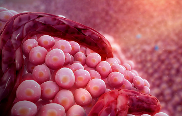 <p>Inhibiting tumor blood vessel formation</p>