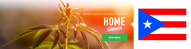 Puerto Rico's favorite homegrown flower