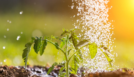 Water Quality Improvement & Biofilm Control