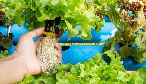 Healthier Roots & Disease Suppression