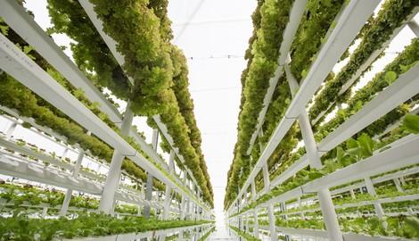 Enhanced Growth & Less Plant Stress