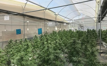 Cultivation Site photo 10 of {{total_images}} thumbnail
