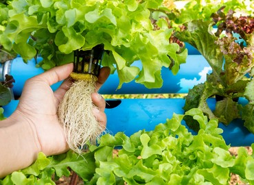 Healthier Roots