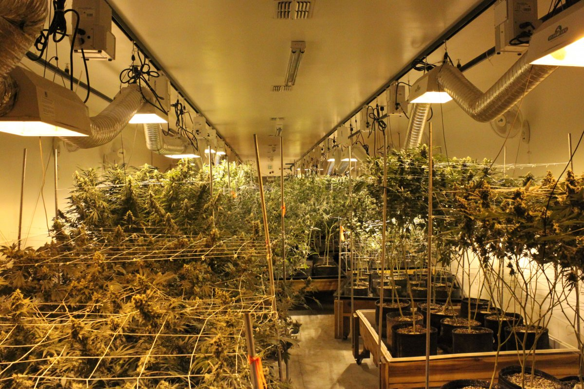 pot-soothes-tremors-for-people-with-parkinsons-disease
