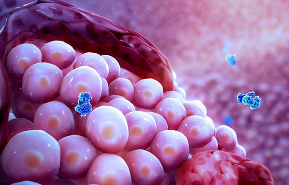 <p>Enhancing the body's own immune system</p>