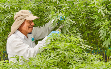 Cultivation Site photo 8 of {{total_images}} thumbnail