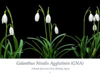 The Antiviral Properties of GNA