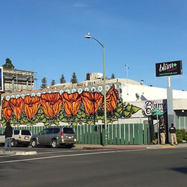 Cannabis Dispensary Oakland and California Dispensary