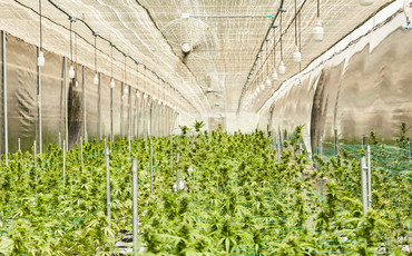 Cultivation Site photo 4 of {{total_images}} thumbnail