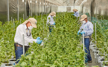 Cultivation Site photo 2 of {{total_images}} thumbnail