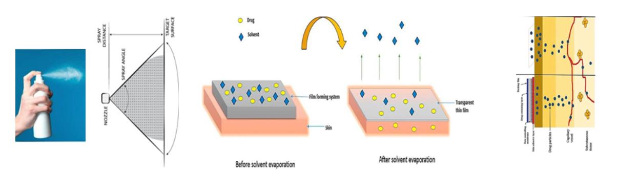 Mechanism of GTX-101 Bioadhesive Film Formation