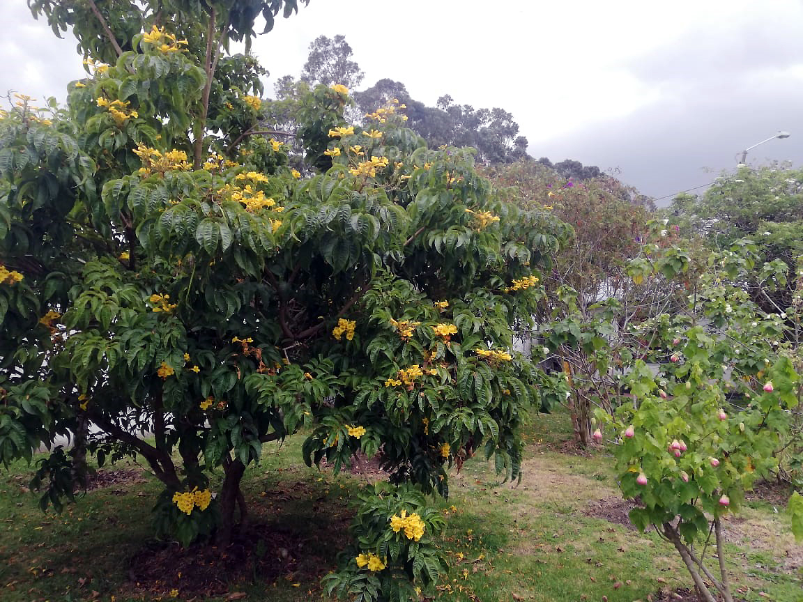 Flowers and trees do well around the Bristow Colombia facilities as a result of the on-site Waste Treatment Plant
