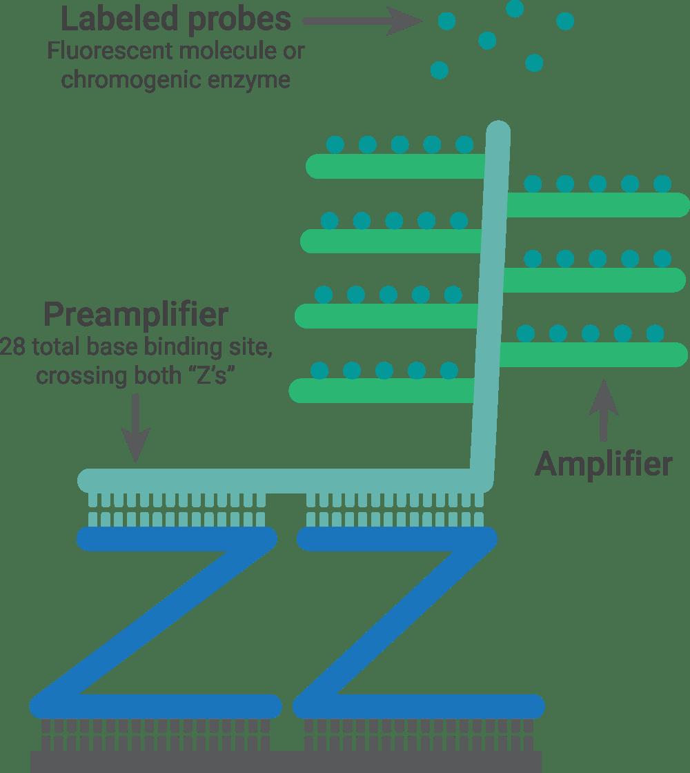 RNAscope technology