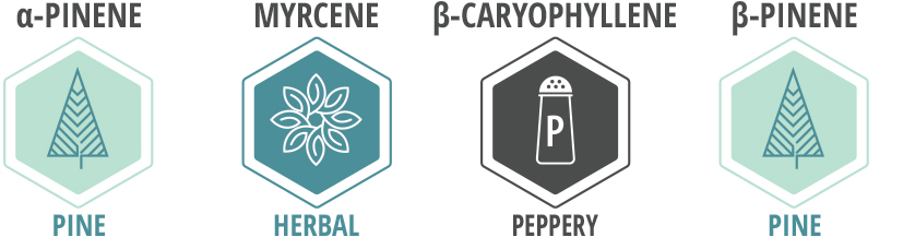 Blue Dream Terpene Profile