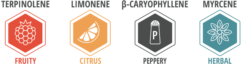 Northern Lights Terpene Profile