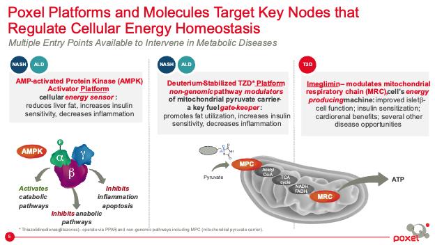 Poxel Platforms and Molecules Target Key Nodes that Regulate Cellular Energy Homeostasis