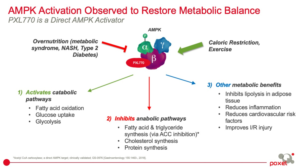 AMPK Activation Observed to Restore Metabolic Balance