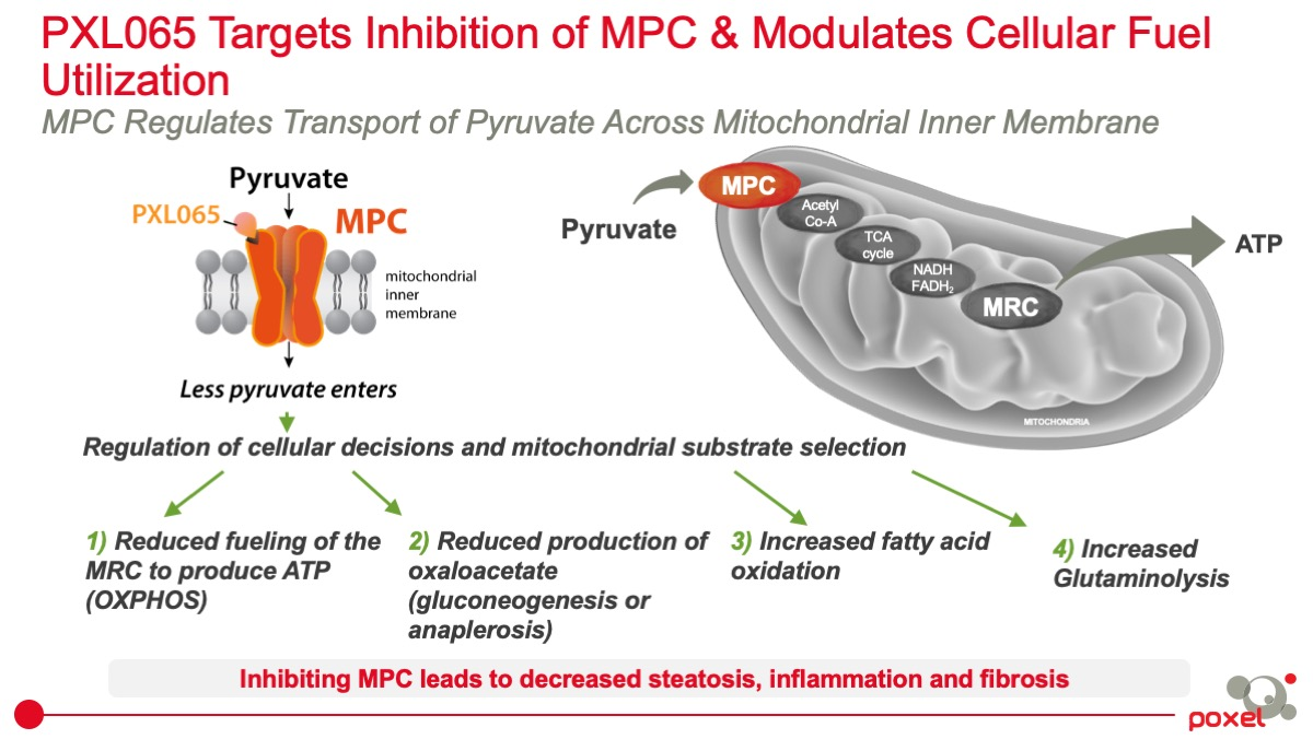 PXL065 Targets Inhibition of MPC & Modulates Cellular Fuel Utilization