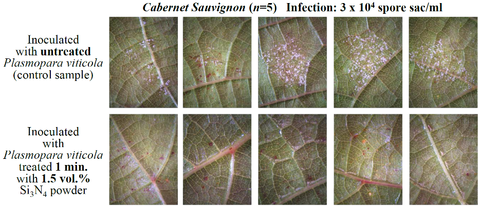 Before and after treatment for Cabernet Sauvignon leaves