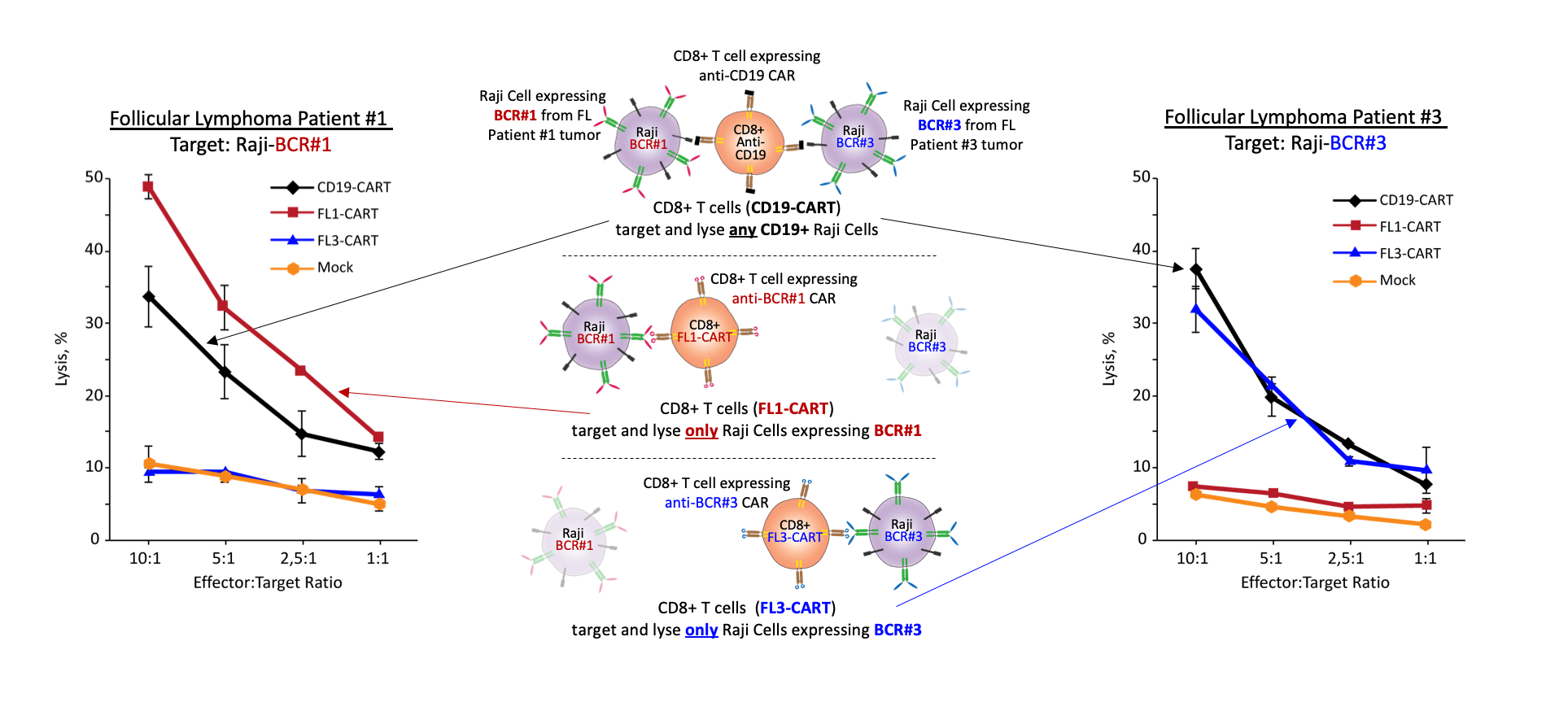 cells expressing cd19 specific cars - HD 1927×874